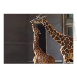 Giraffe an intimate moment greeting card