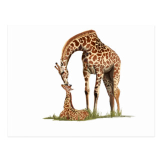Giraffe and baby calf kissing postcard