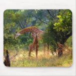 Giraffe and Baby Mousepad