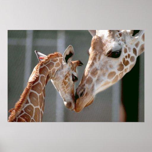 Giraffe and Baby print