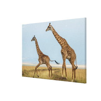 Giraffe and Young Running Canvas Print