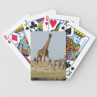 Giraffe and Zebras by a Waterhole Bicycle Playing Cards