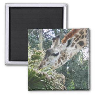 Giraffe at lunch magnet