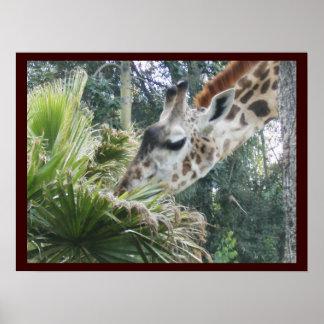 Giraffe at Lunch Poster