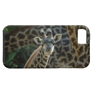 Giraffe calf with giraffes iPhone 5 cover