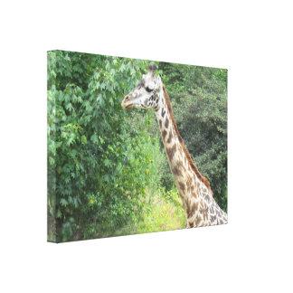 Giraffe Stretched Canvas Print