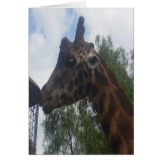 Giraffe Greeting Card