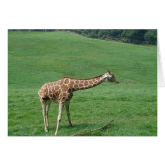 Giraffe Card! Greeting Card