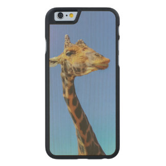 Giraffe Carved® Maple iPhone 6 Slim Case