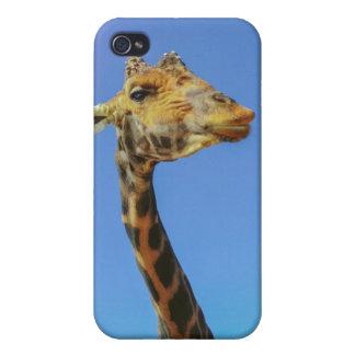 Giraffe Cases For iPhone 4