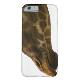 Giraffe,close up barely there iPhone 6 case