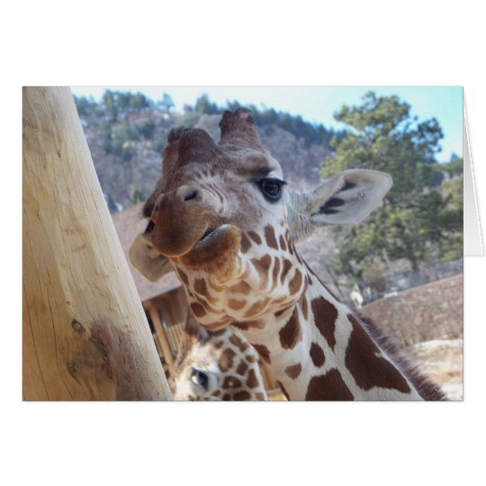Giraffe Close Up Card