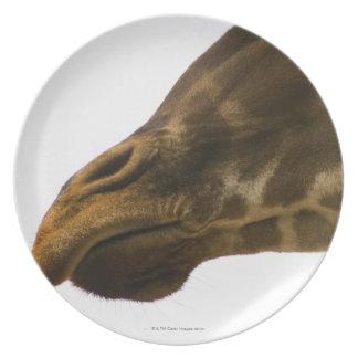 Giraffe,close up dinner plate