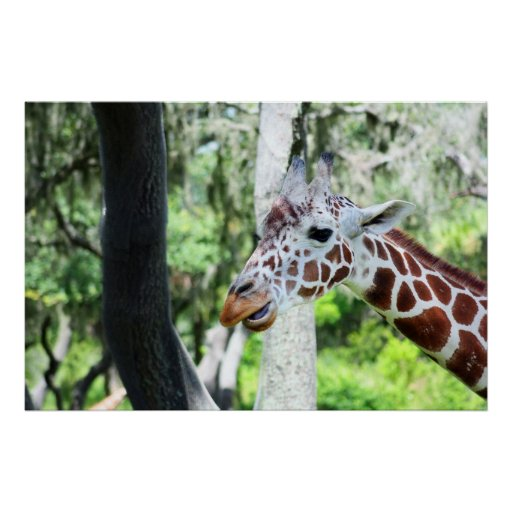 Giraffe Close Up Portrait Posters