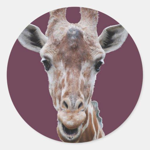 giraffe cutout plum round stickers