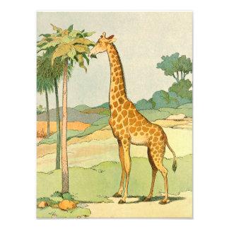 Giraffe Eating Acacia Leaves Illustrated Photo Art