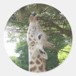 Giraffe Eating Leaf Classic Round Sticker