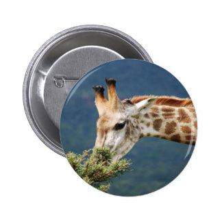 Giraffe eating some leaves 6 cm round badge
