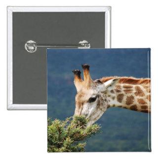 Giraffe eating some leaves 15 cm square badge