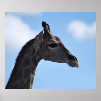 Giraffe eating some leaves print