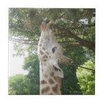 Giraffe Eating Tile