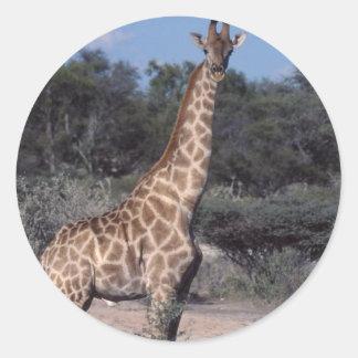 Giraffe - Etosha National Park, Namibia Classic Round Sticker