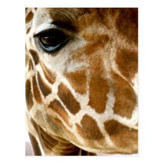Giraffe Face Closeup | Wild Animals Nature Photo Postcard