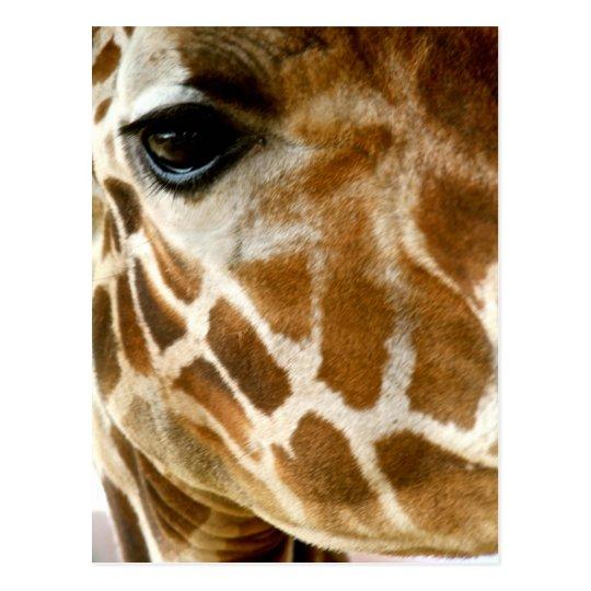 Giraffe Face Closeup | Wild Animals Nature Photo