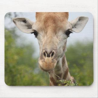 Giraffe Face Mouse Pad
