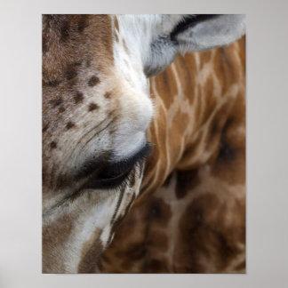 Giraffe Face Poster
