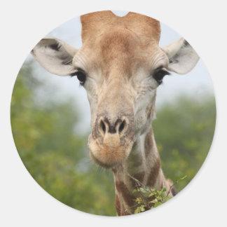 Giraffe Face Round Sticker
