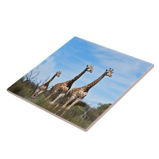 Giraffe Family Large Square Tile