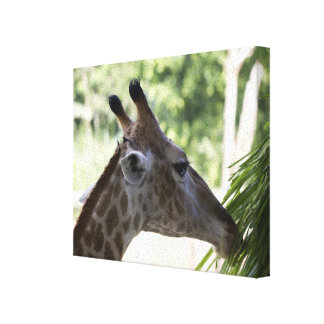 Giraffe Foraging Wrapped Canvas