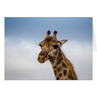 Giraffe from South Africa Card