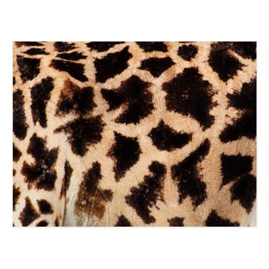 Giraffe Fur Texture Postcard