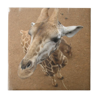 Giraffe Gaze Tile