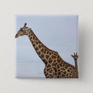 Giraffe (Giraffa camelopardalis), Chobe National P 15 Cm Square Badge