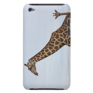 Giraffe (Giraffa camelopardalis), Chobe National P iPod Case-Mate Cases