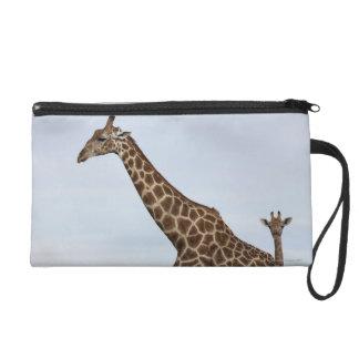 Giraffe (Giraffa camelopardalis), Chobe National P Wristlet