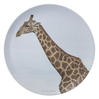 Giraffe (Giraffa camelopardalis), Chobe National Plates