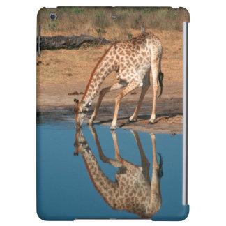 Giraffe (Giraffa Camelopardalis) Drinking