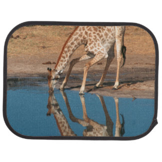 Giraffe (Giraffa Camelopardalis) Drinking Car Mat