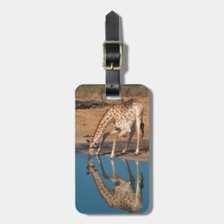 Giraffe (Giraffa Camelopardalis) Drinking Luggage Tag