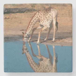 Giraffe (Giraffa Camelopardalis) Drinking Stone Beverage Coaster