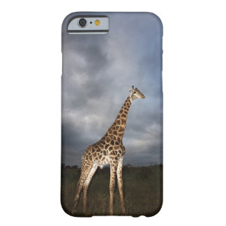 Giraffe (Giraffa camelopardalis) in dramatic Barely There iPhone 6 Case