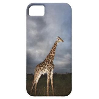 Giraffe (Giraffa camelopardalis) in dramatic Case For The iPhone 5