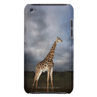 Giraffe (Giraffa camelopardalis) in dramatic iPod Case-Mate Case