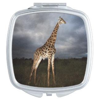 Giraffe (Giraffa camelopardalis) Makeup Mirror