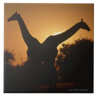 Giraffe (Giraffa camelopardalis) Pair Large Square Tile