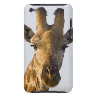 Giraffe (Giraffa camelopardalis) portrait, Imire Barely There iPod Covers